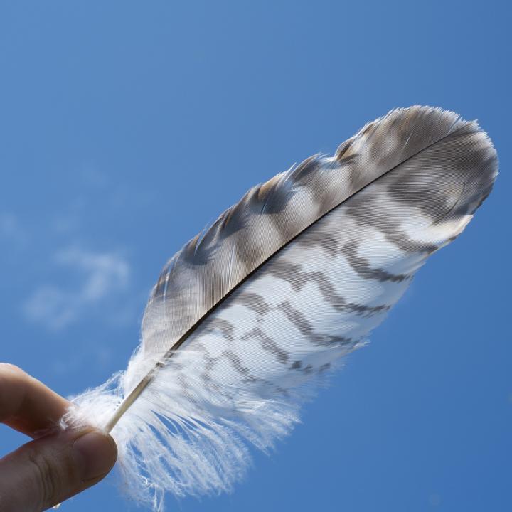 「キャプテン翼」からリーダーシップを学ぶ